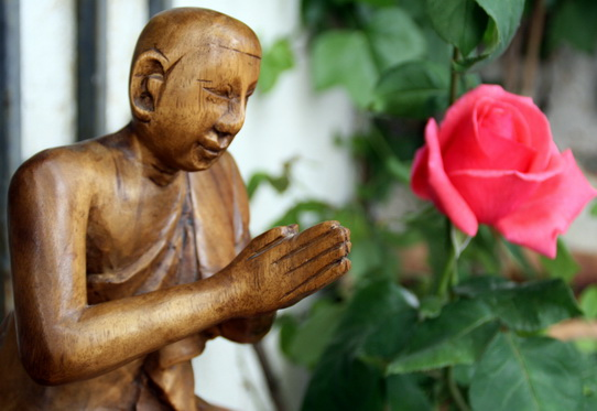 La rosa y el contemplador ( Foto © P.M.Lamet)
